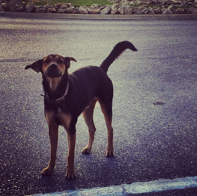 stray dog in aruba