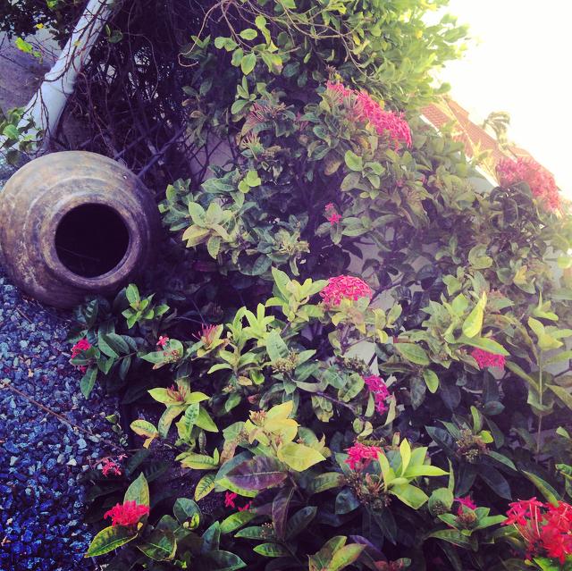 Flowers in aruba by ela mariie