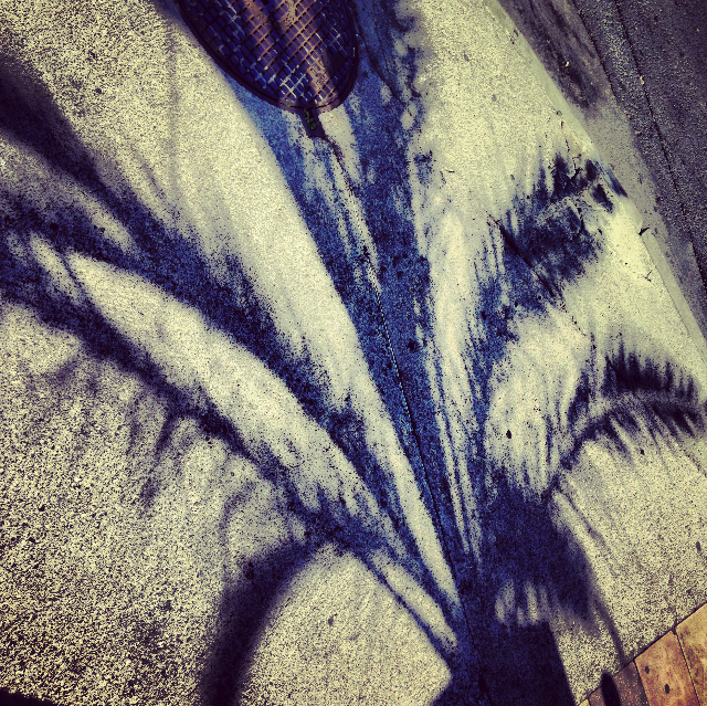 palm tree shadow