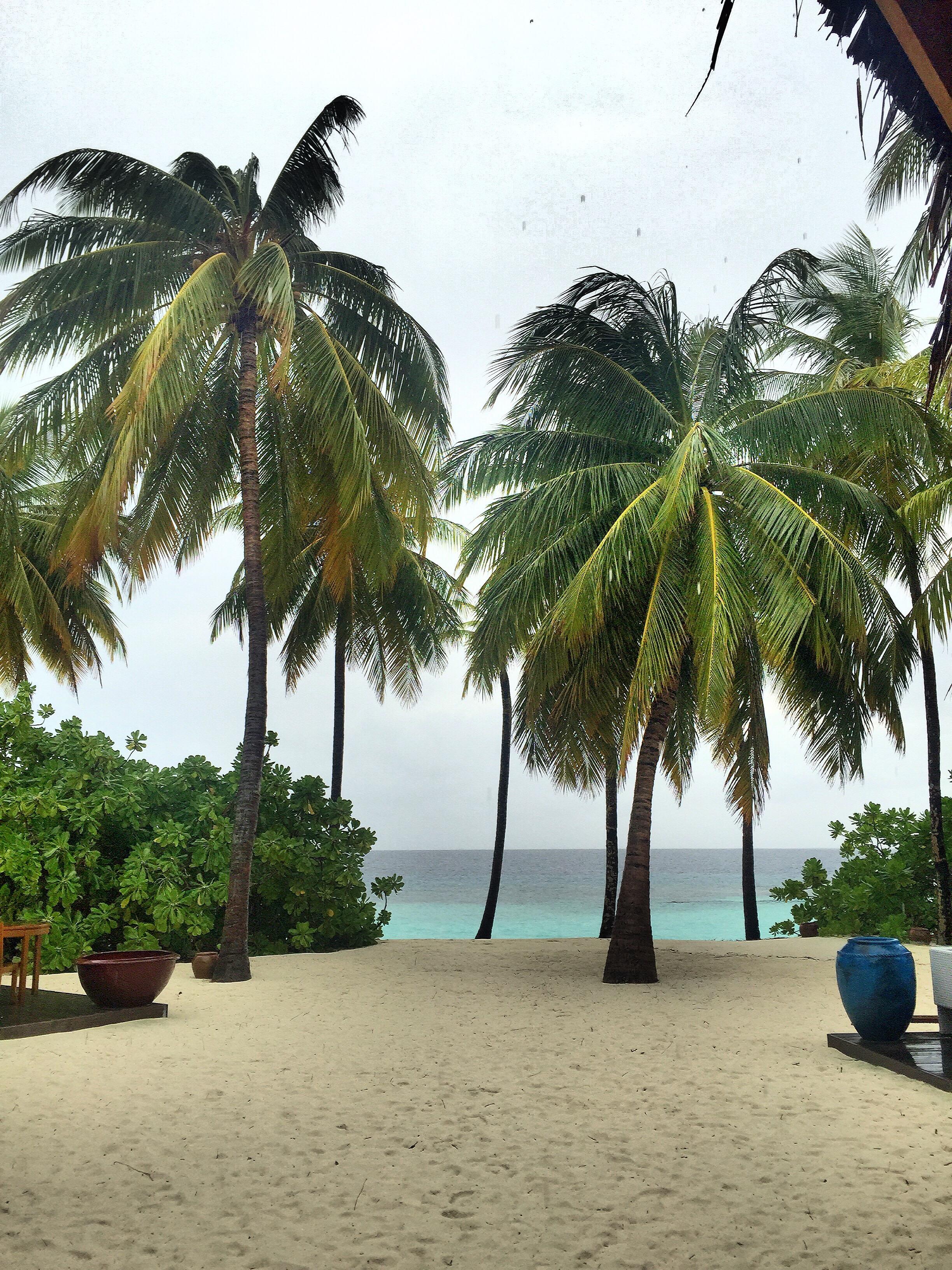 island-palms