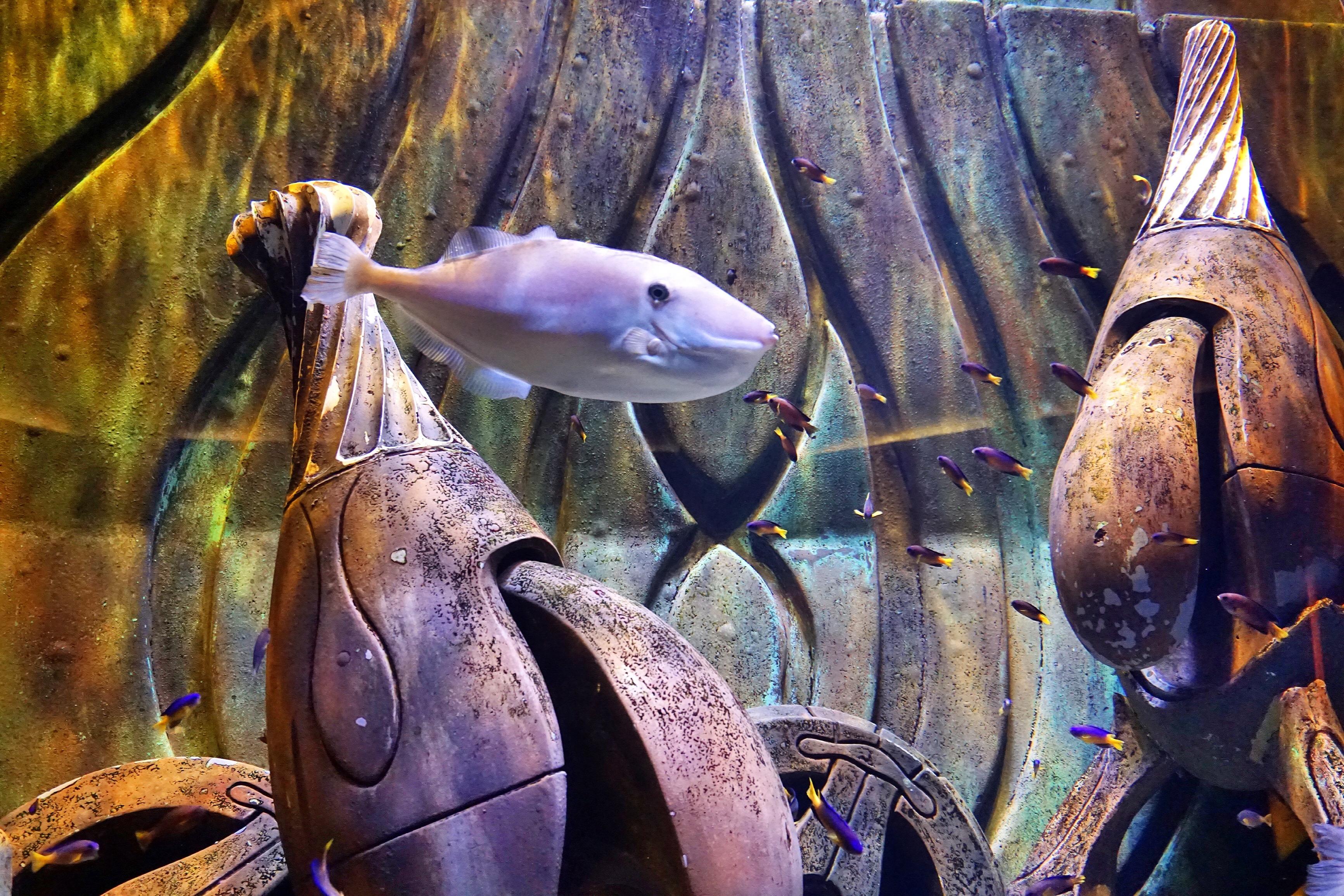 fish-atlantis-dubai
