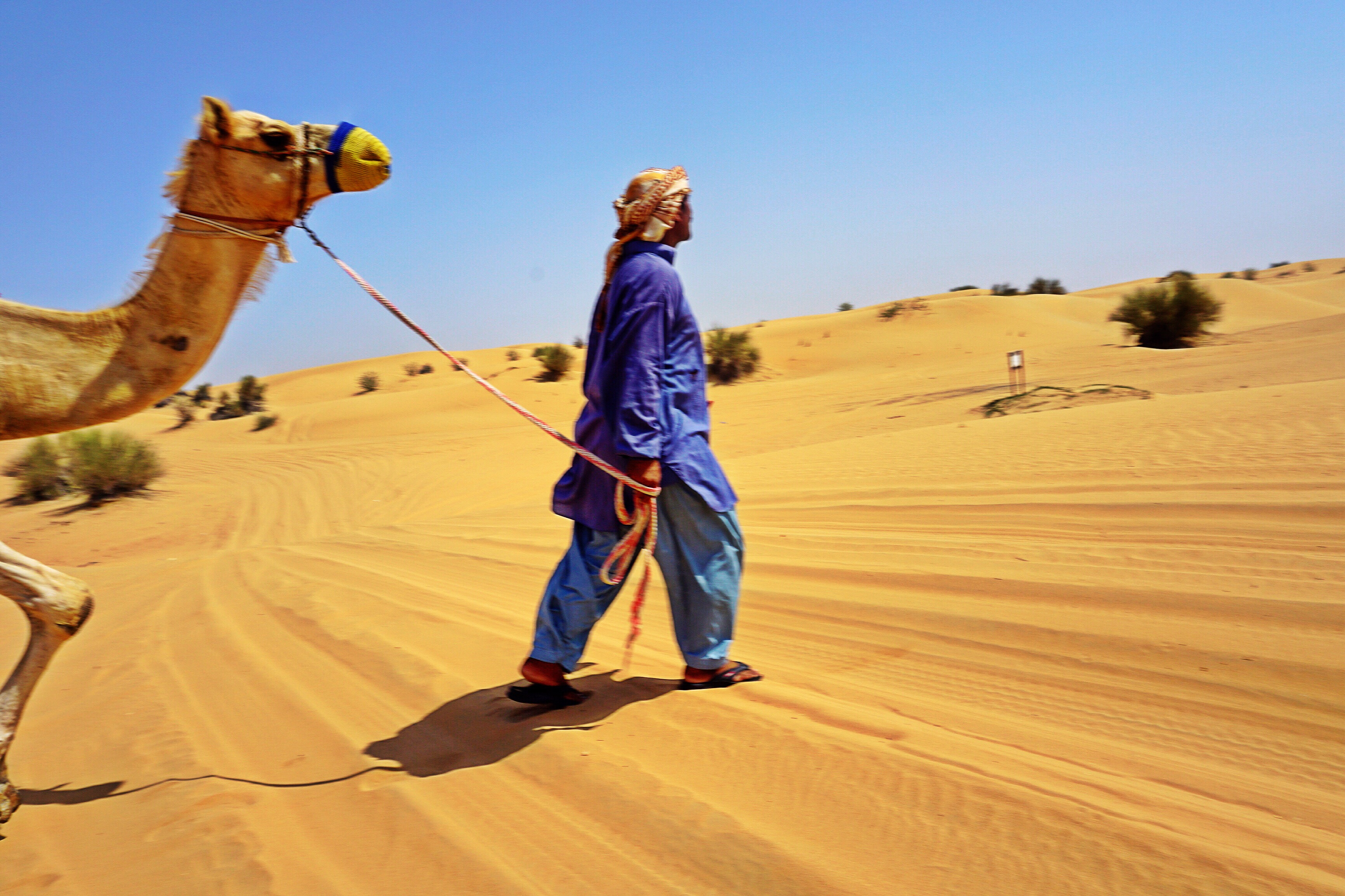 walking-through-the-desert-dubai-camel
