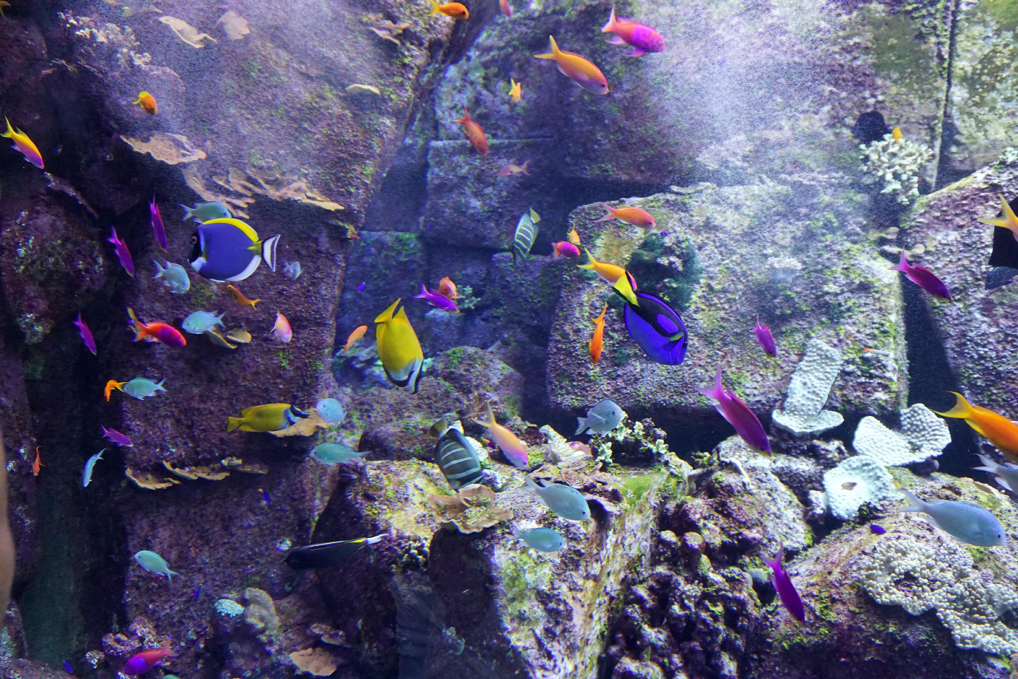 fish-aquarium-atlantis-dubai