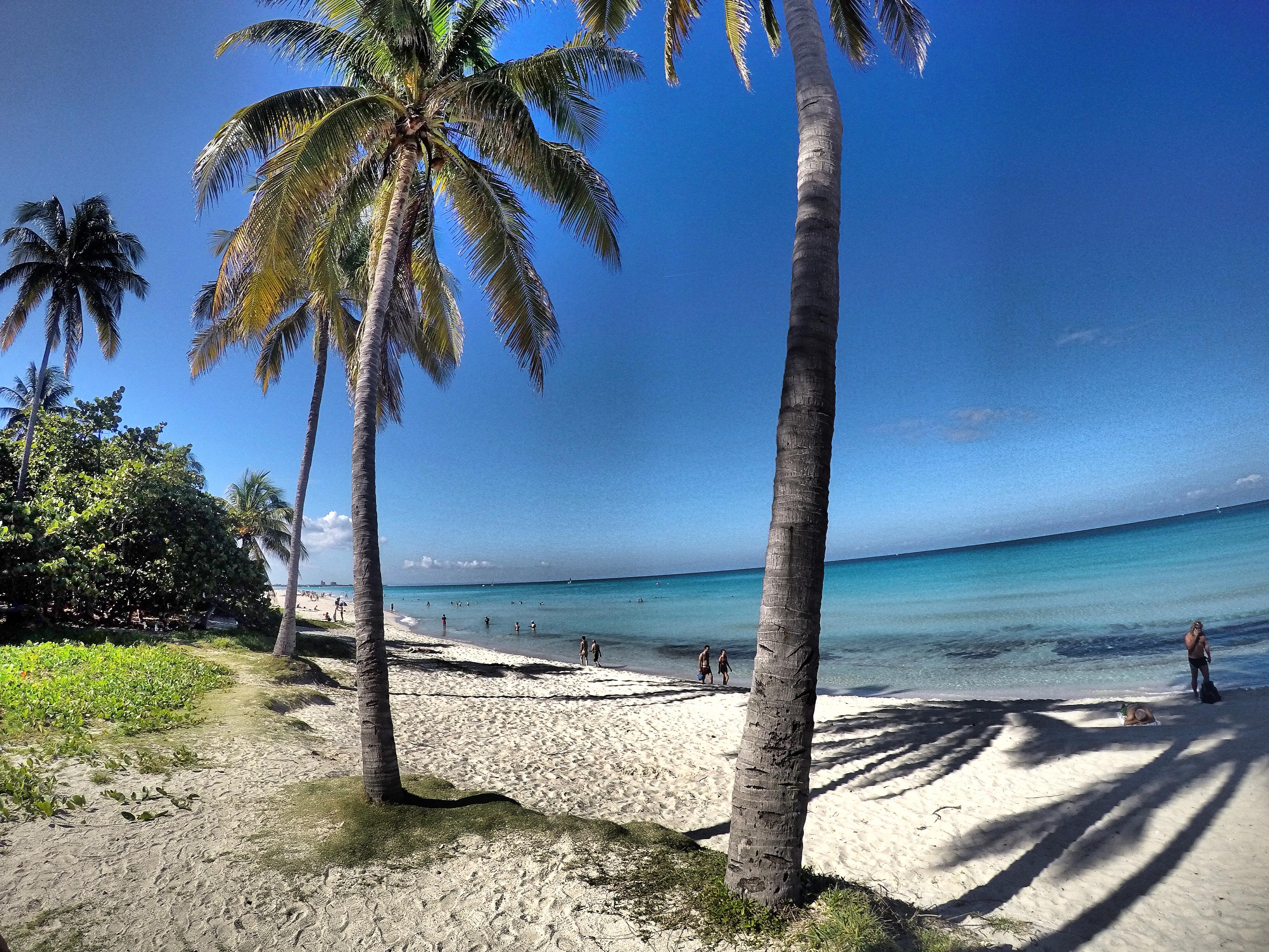 palm-tree-varadero
