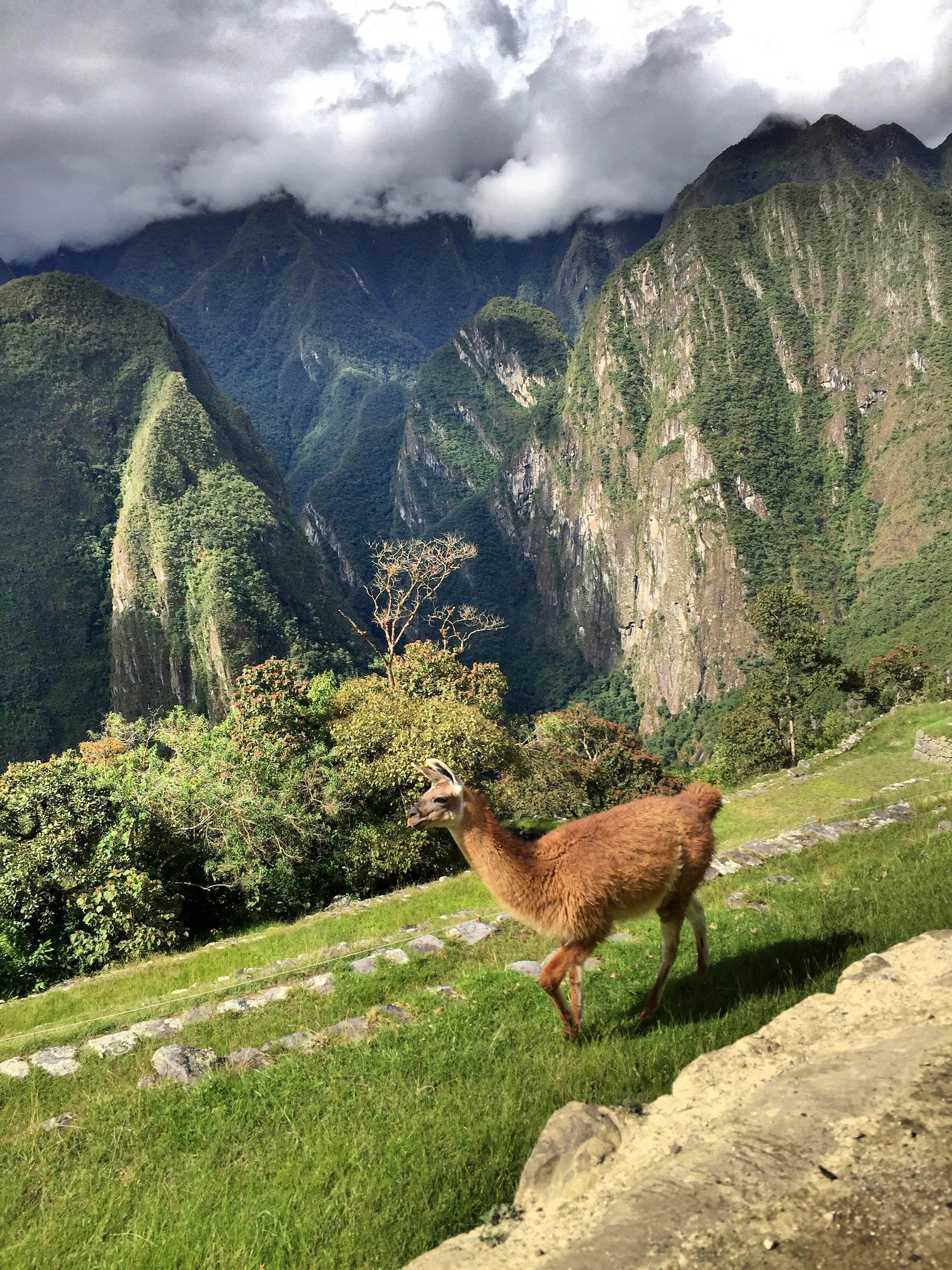 llama-alpaca=machu-picchu