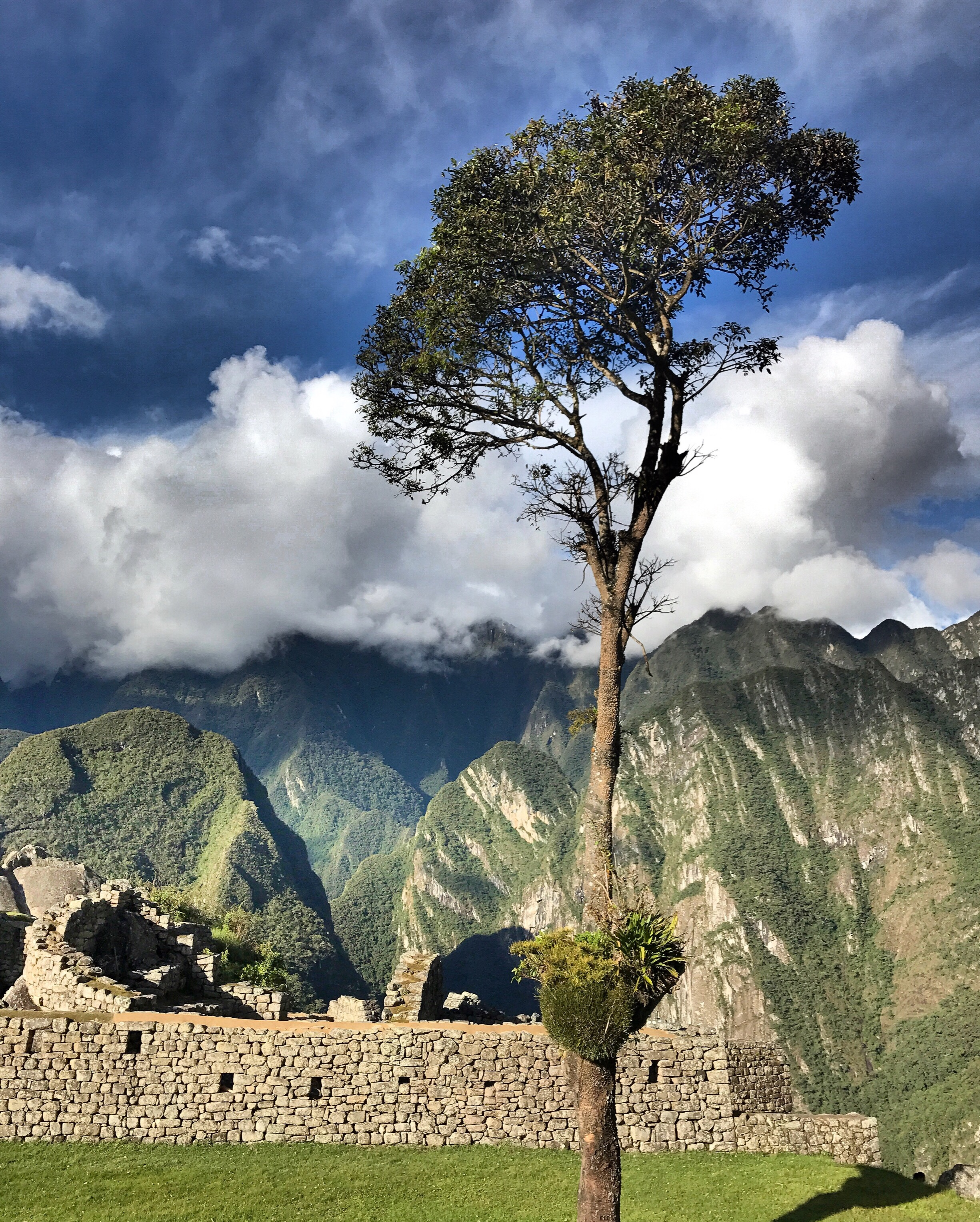 the-most-sacred-tree-machu-picchu