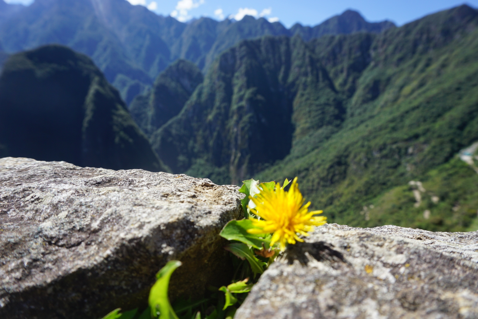 machu-picchu-cool-flower-picture-andes-mountains